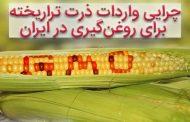 ۸۹درصد محصولات کشاورزی دنیا «غیرتراریخته» است/ چرایی واردات ذرت تراریخته برای روغنگیری در ایران