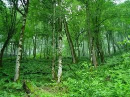 مسئولیت همگانی در حفظ جنگلها و مراتع