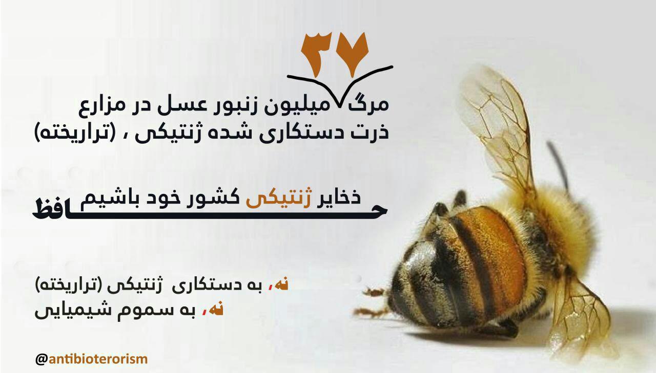 مرگ ۳۷ میلیون زنبور