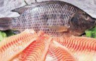 مضرات ماهی تیلاپیلا