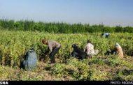حمایت از کشاورزی محور برنامههای کشورهای موفق در فقرزدایی / بخش هفتم(بخش پایانی)