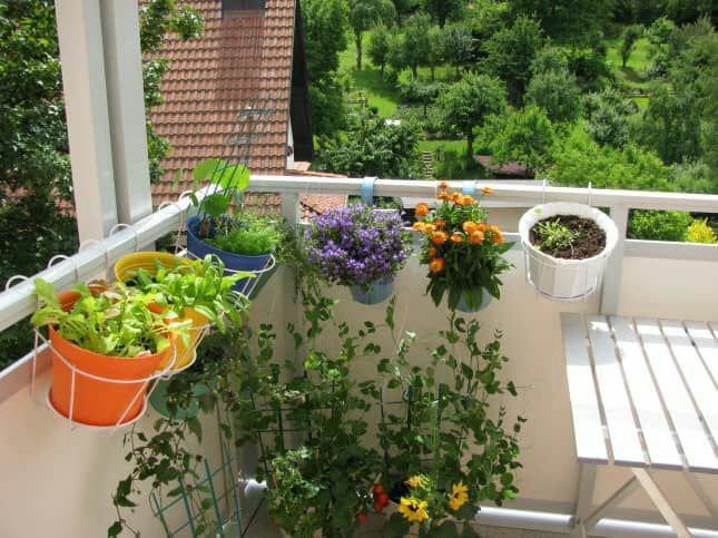 ️ نگهداری گل و گیاه در تابستان
