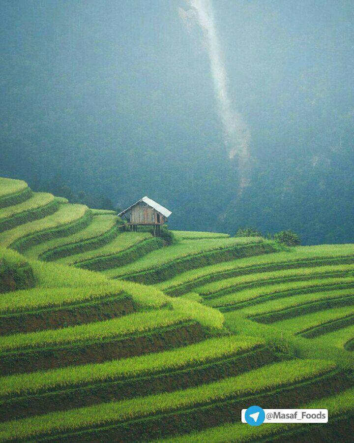 مزارع پلکانی در ویتنام