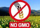 آمریکا فروش دارو را تحریم میکند؛ اما بذر تراریخته به ایران میدهد!