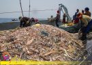ماهیگیری چینیها در آبهای ایران رسما تایید شد!!