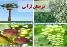 درختان قرآنی
