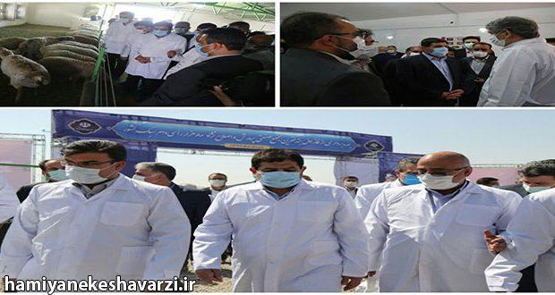 افتتاح بزرگترین مجتمع صنعتی تولید دام کشور توسط ستاد اجرایی فرمان امام(ره)